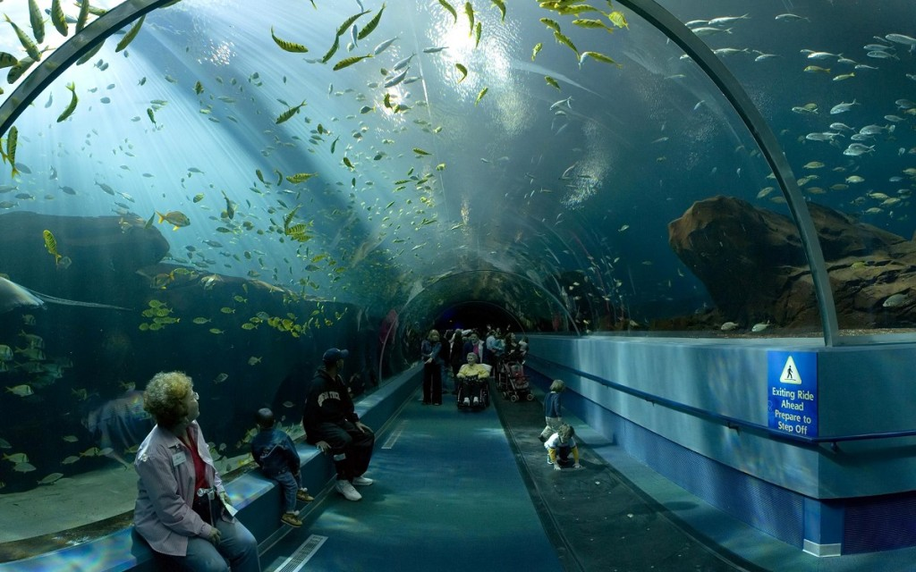 georgia_aquarium_ocean_voyager_tunnel