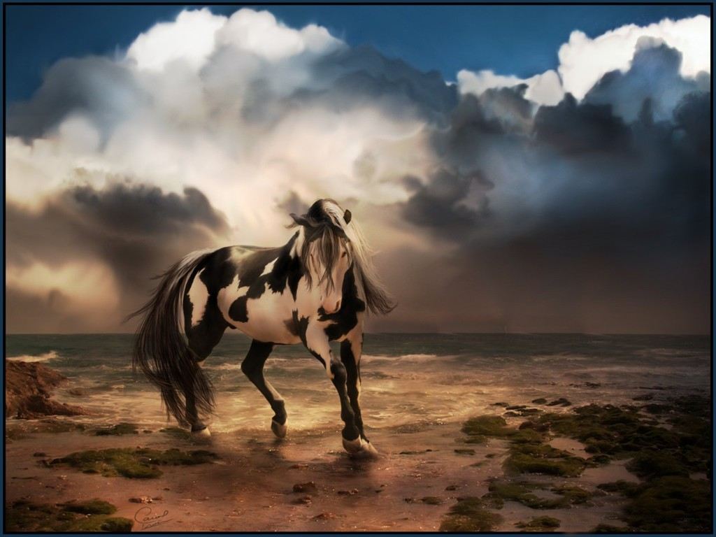 Wild-Horse-Free-Desktop-Background-4