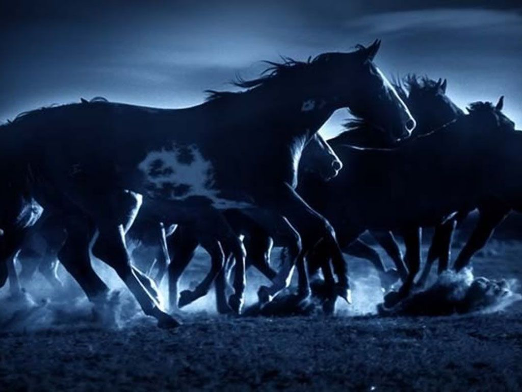 herd_of_dark_horses_wallpaper_-_1024x768