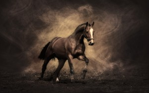majestic-horse-animal-hd-wallpaper-1920x1200-6605