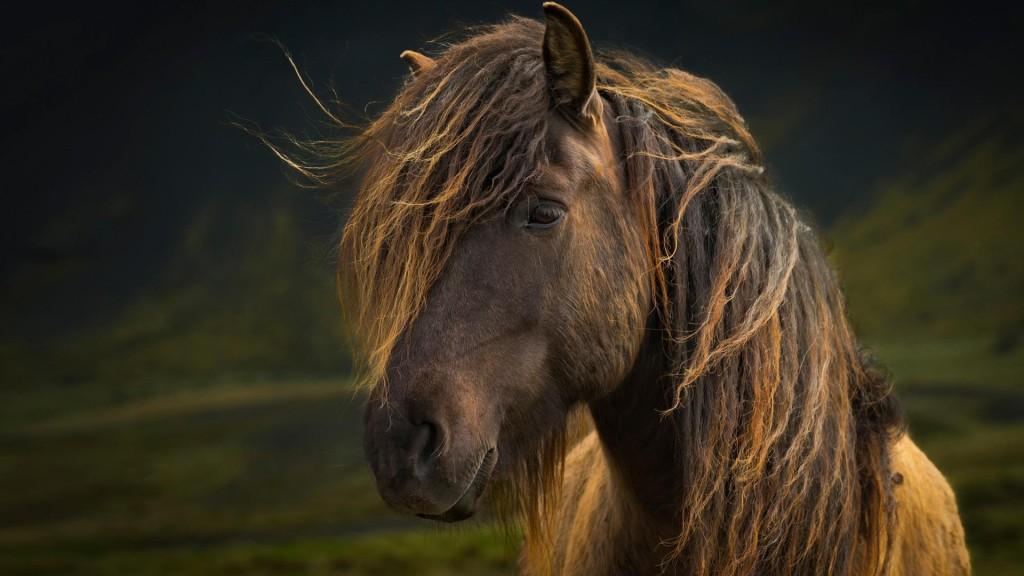 mane_horse_look
