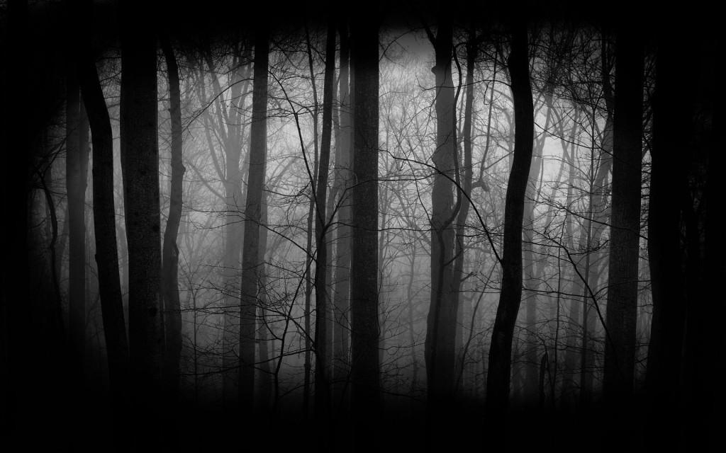 784635-dark-forest-wallpaper