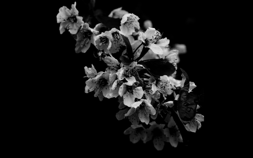 black-and-white-flower-wallpaper-for-walls-2