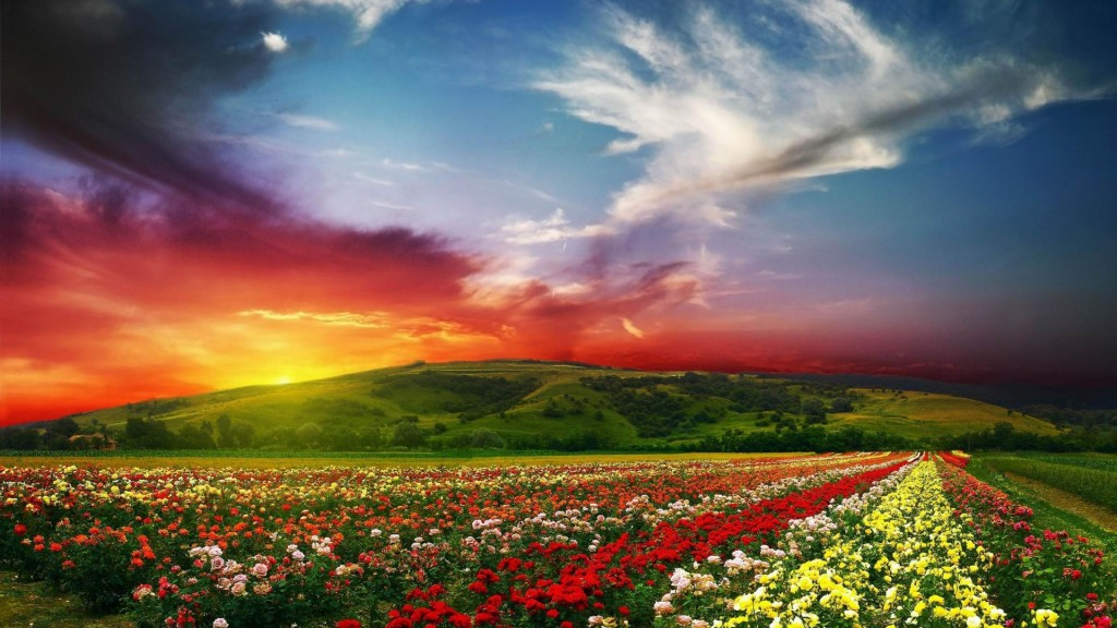 Rose-flowers-garden-wide-new-desktop-wallpapers-in-hd