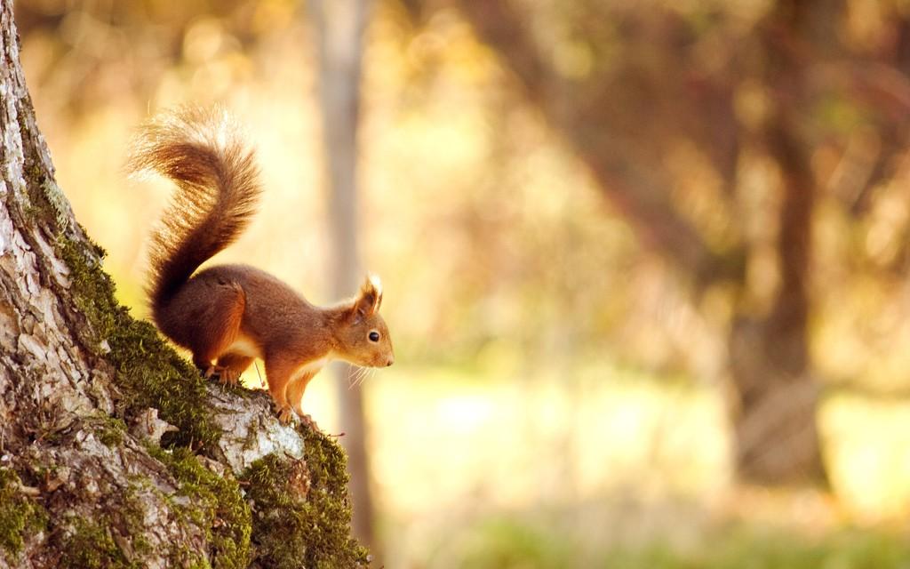 squirrel-2880x1800